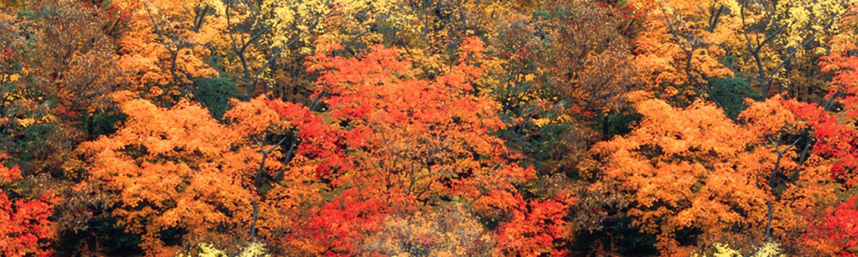 Bücher im Herbst – der Blog-Start